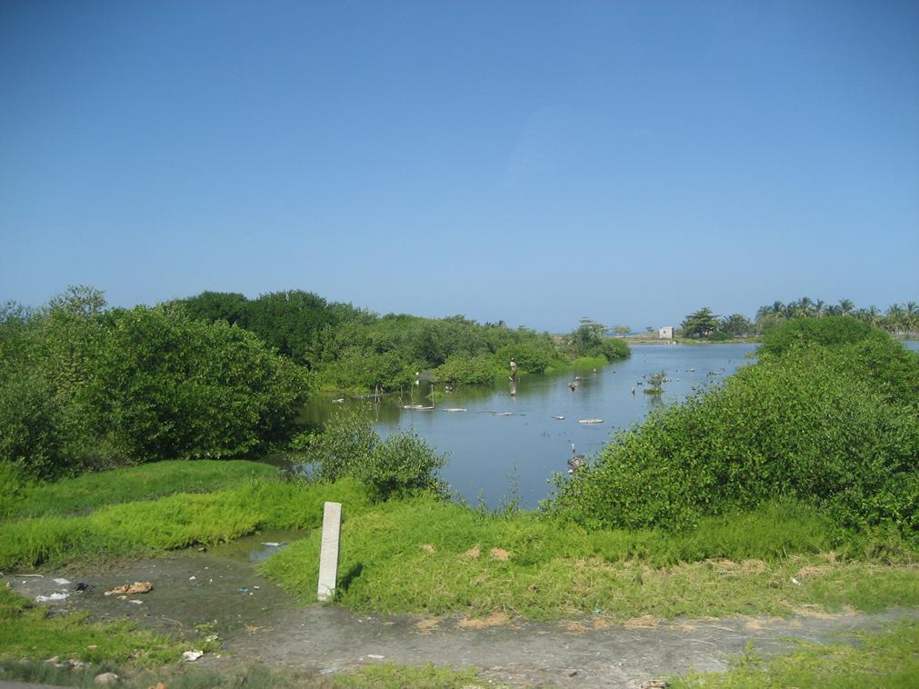 Mangrove near the town of Cienaga, Magdalena, in the Ci naga Grande de Santa Marta swampy marshes, Colombia.