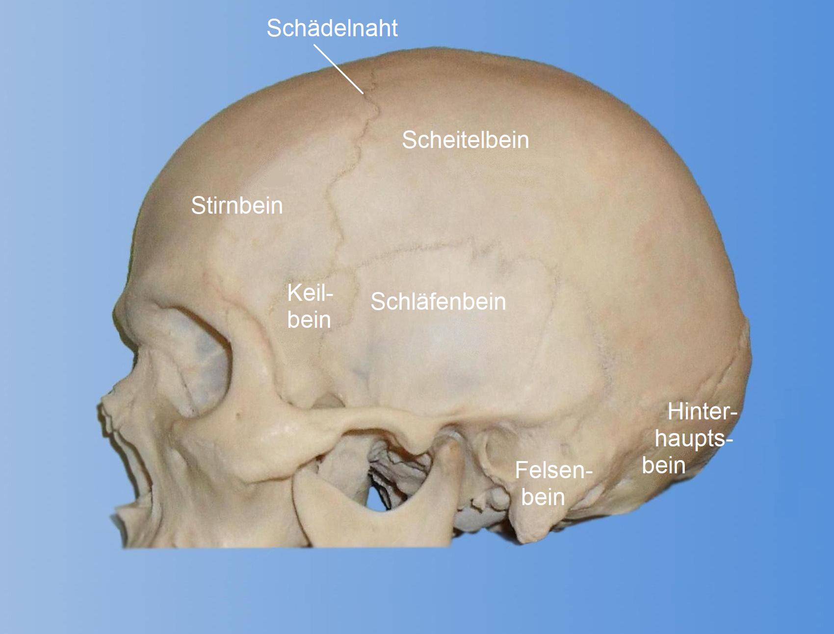 Knochenbeule Am Hinterkopf
