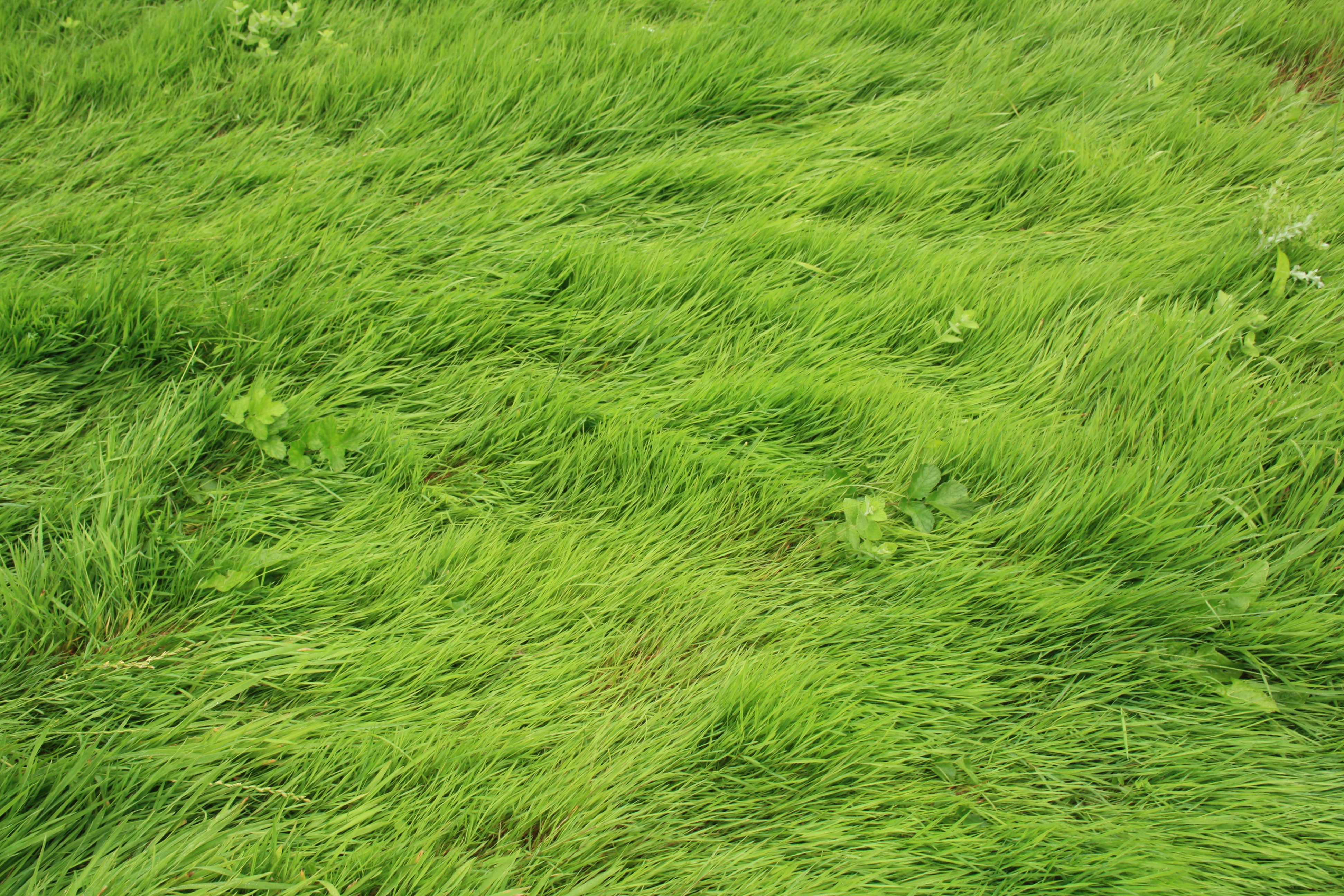 Painting Grass On A Craft