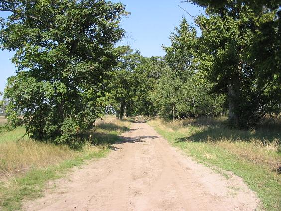 Fil:Dirt road, Teltow, Brandenburg.jpg