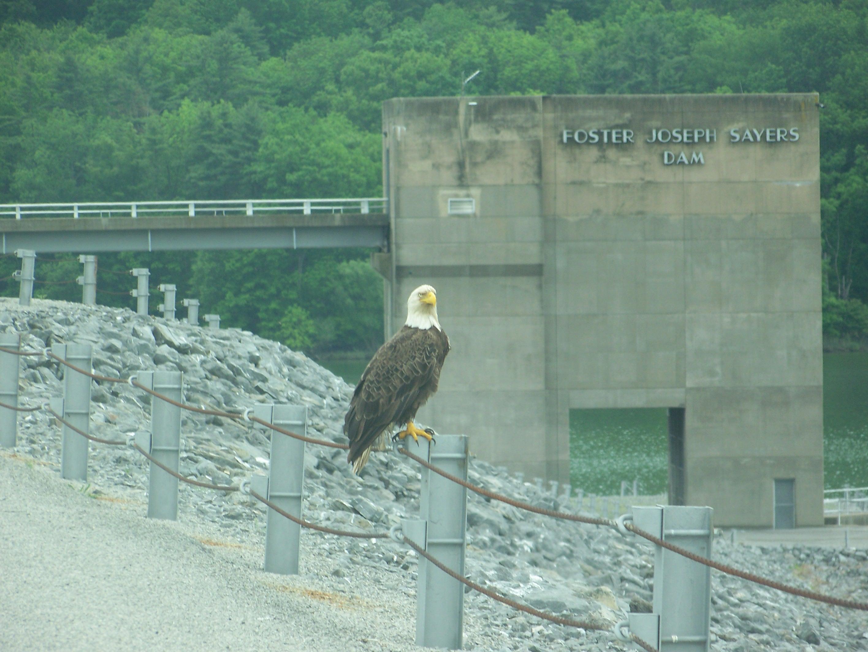 Image result for lake at bald eagle state park