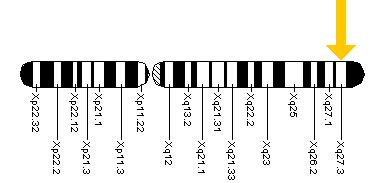 Location of the FMR1 gene