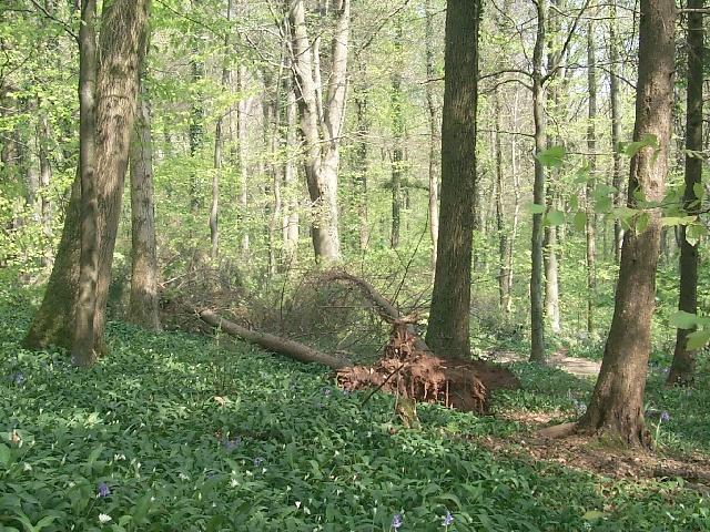Forest Fawr, nr Tongwynlais - geograph.org.uk - 410445