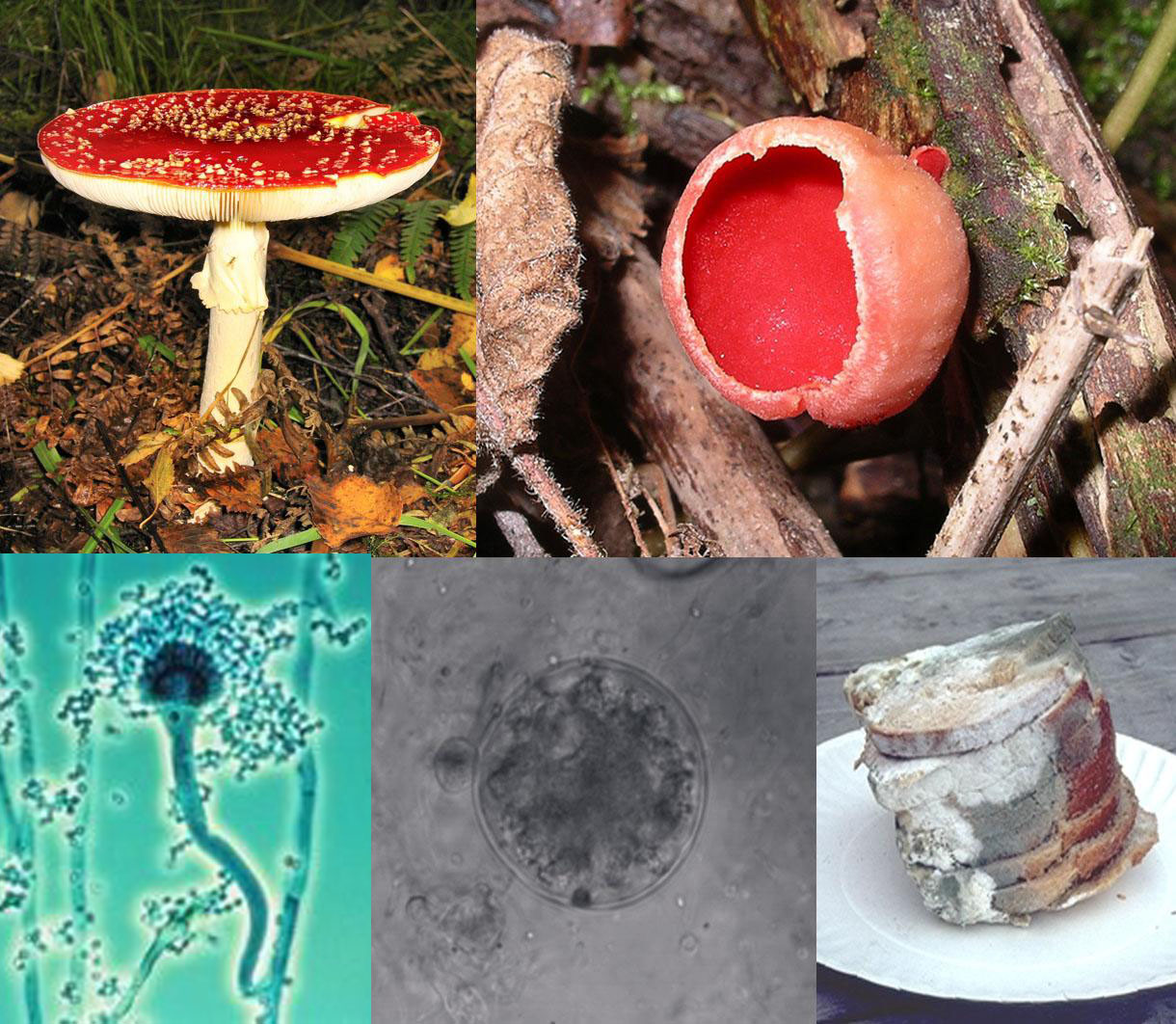 [Image: Fungi_collage.jpg]