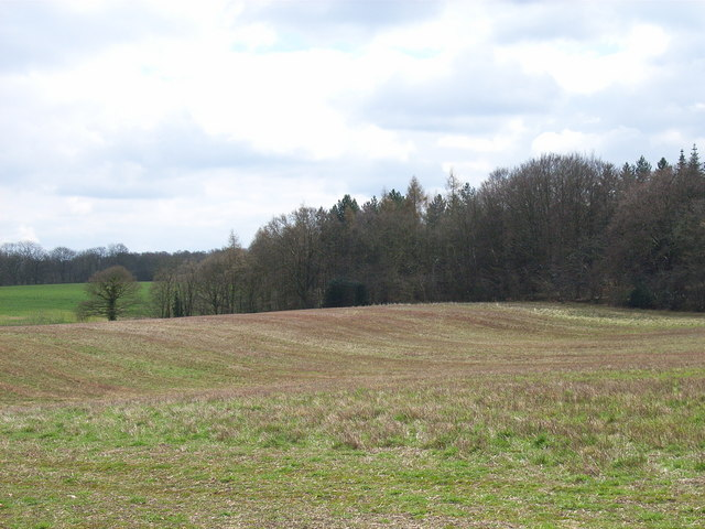 Hales Wood - geograph.org.uk - 150490