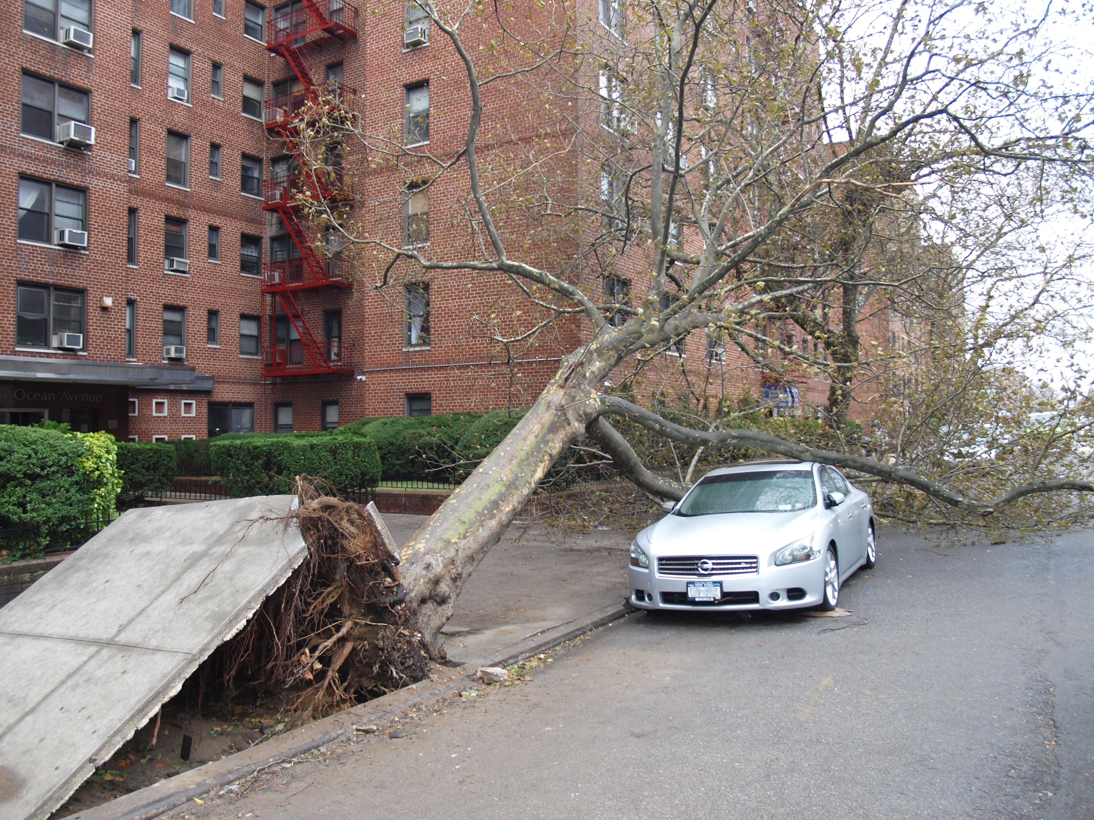 the effect of hurricane sandy essay The cause & effect of hurricanes hurricanes are the most destructive natural disasters in the world the effect of hurricane sandy on jamaica essay.