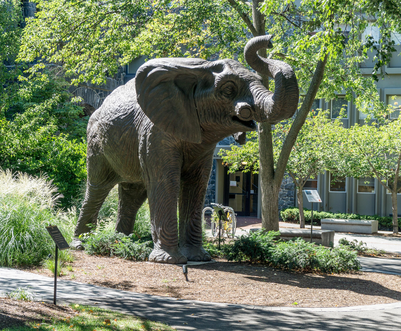 Elephant statue at Tufts University