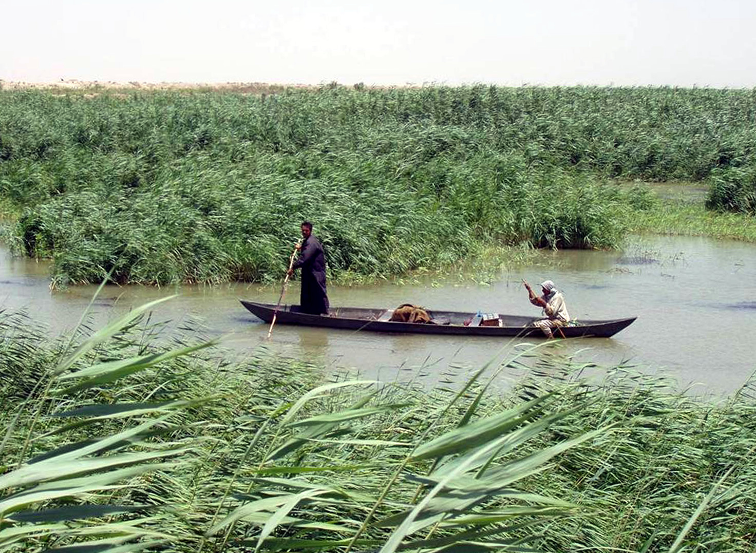 Mesopotamian marshes wikipedia for Today fishing times