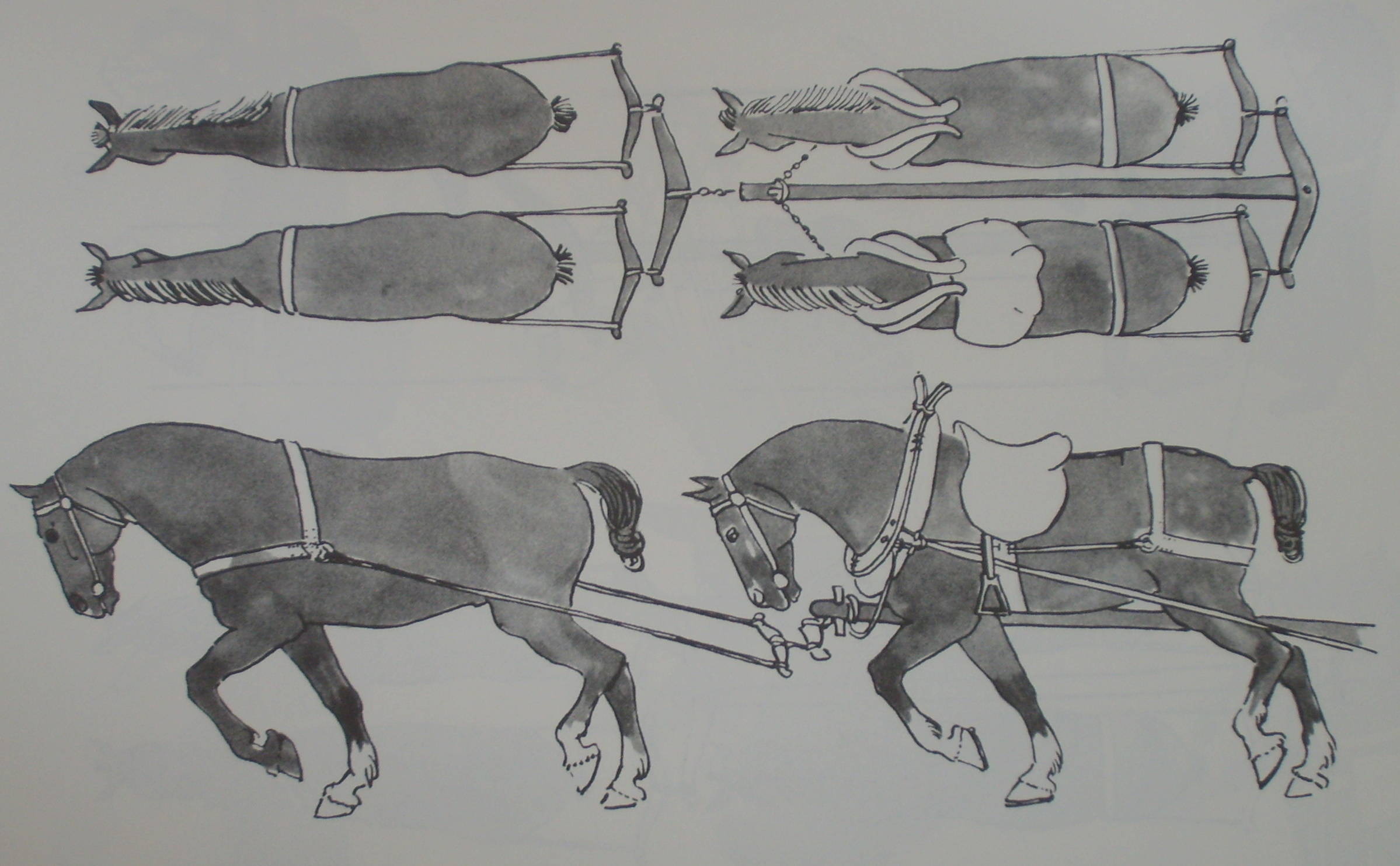 Horses in the Middle Ages | Military Wiki | FANDOM powered by Wikia
