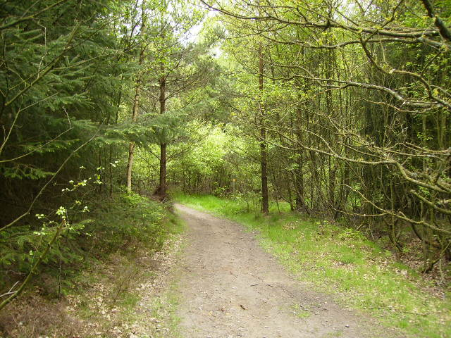 One of many tracks in Wykeham Forest - geograph.org.uk - 422900