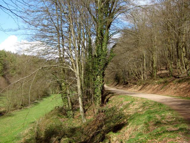 Path through King's Cliff Wood, North Petherton - geograph.org.uk - 1241830