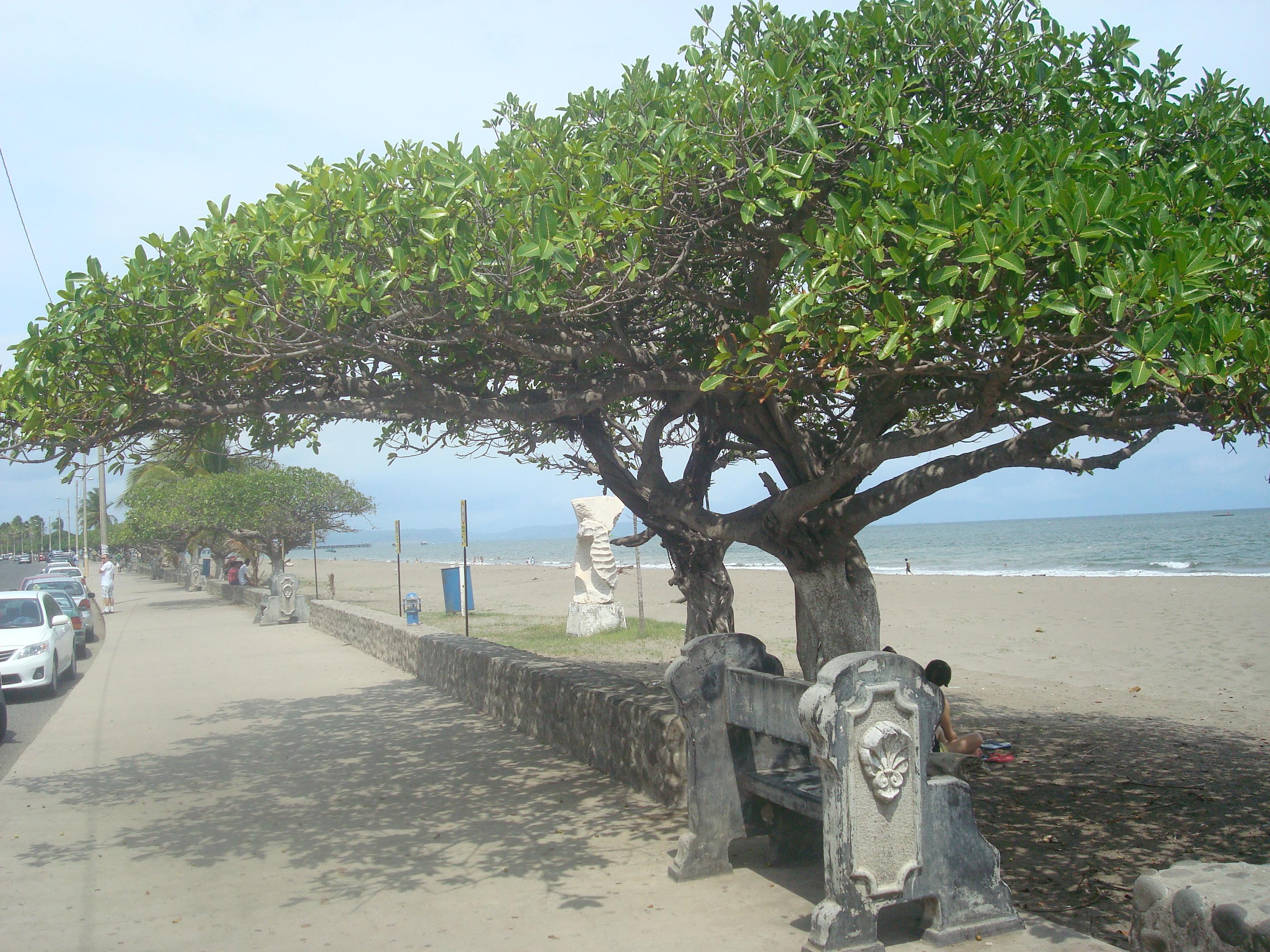 Almendro Costa Rica