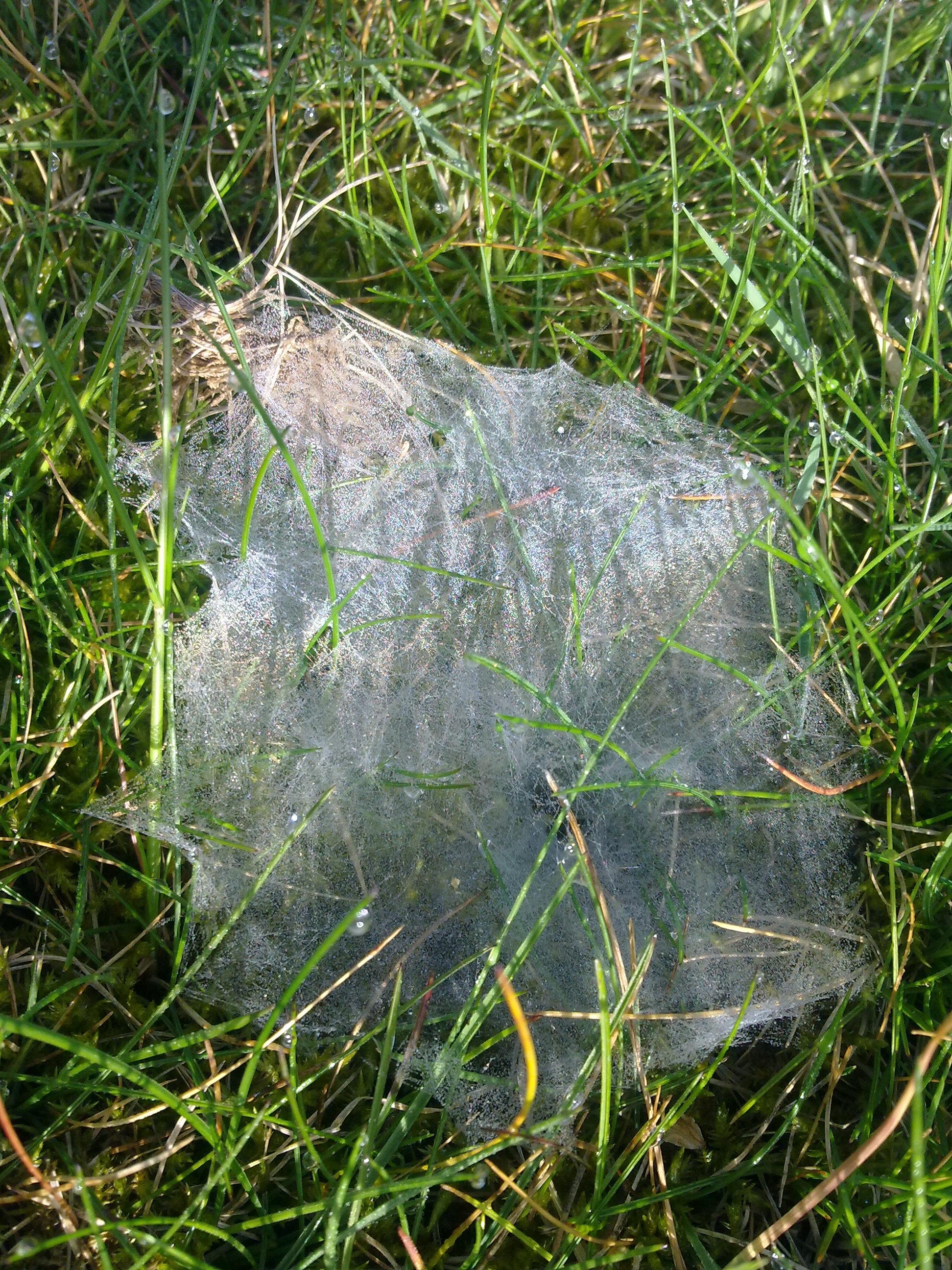 file toile d araign 233 e dans l herbe 224 grez doiceau 003 jpg