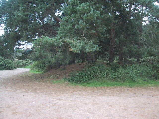 Tumulus in the Carpark on Woodbury Common - geograph.org.uk - 956365