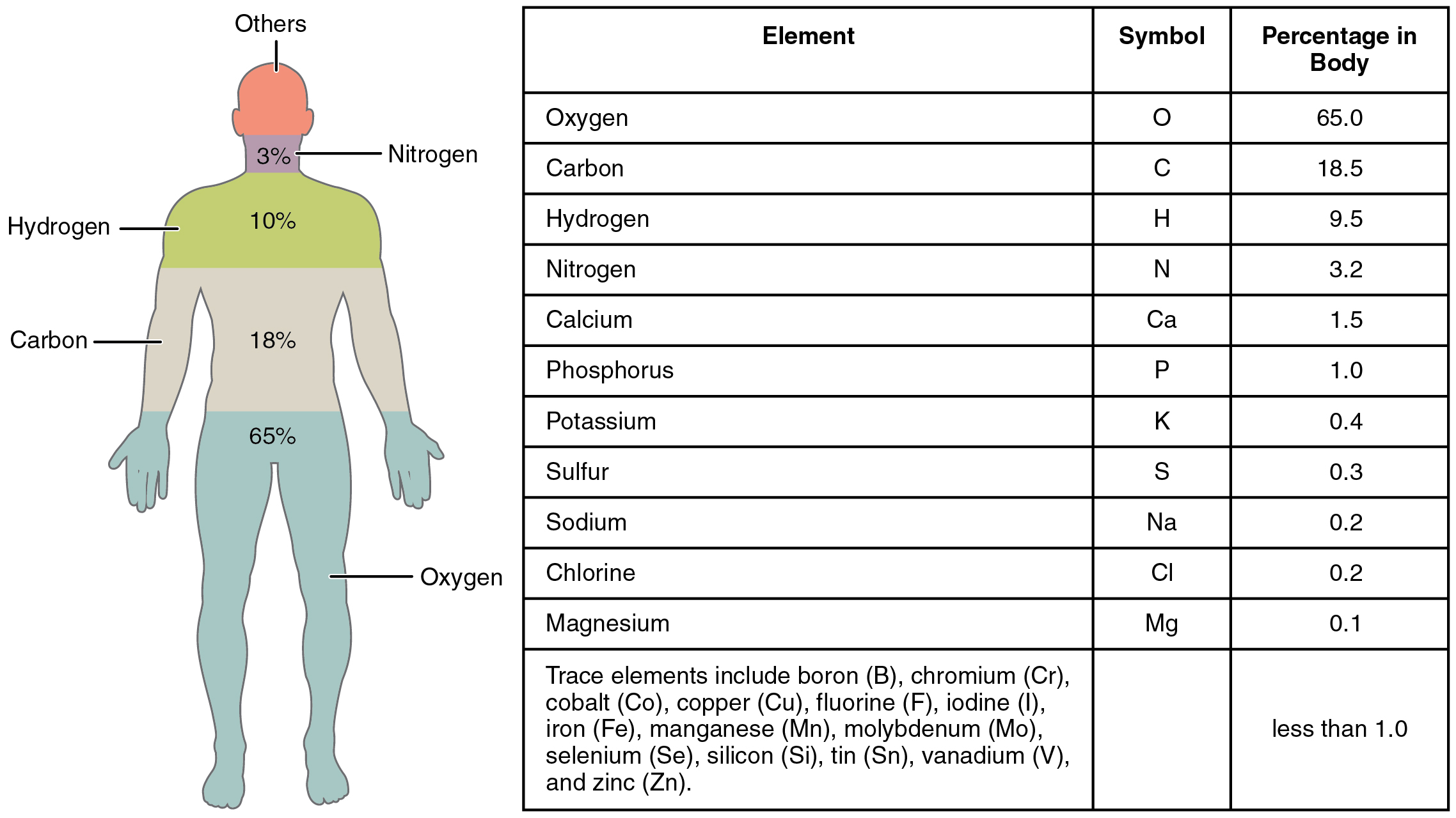 [Image: 201_Elements_of_the_Human_Body-01.jpg]