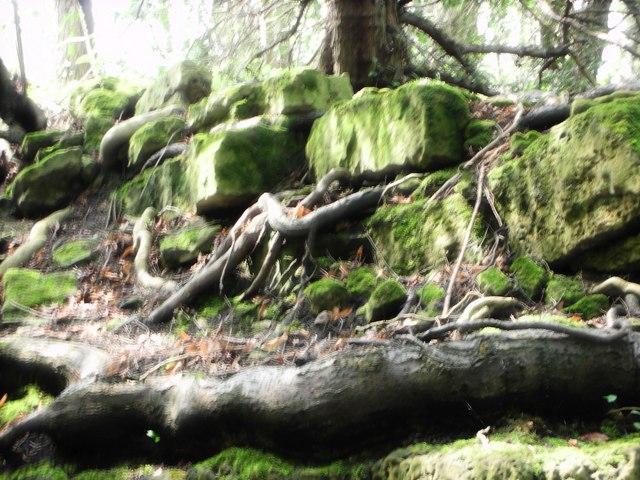 Anston Stones Wood - geograph.org.uk - 1540630