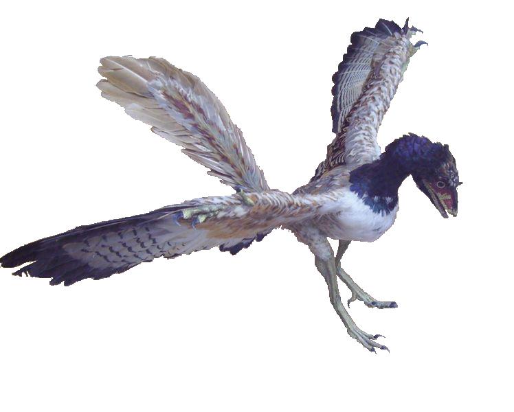 Možná podoba archaeopteryxa
