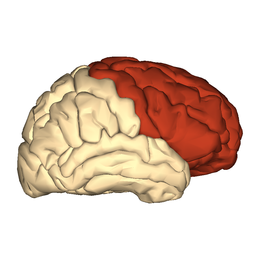 File:Cerebrum - frontal lobe - lateral view.png - Wikimedia Commons