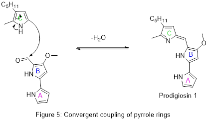 Stitching together the pyrrole rings of Prodigiosin