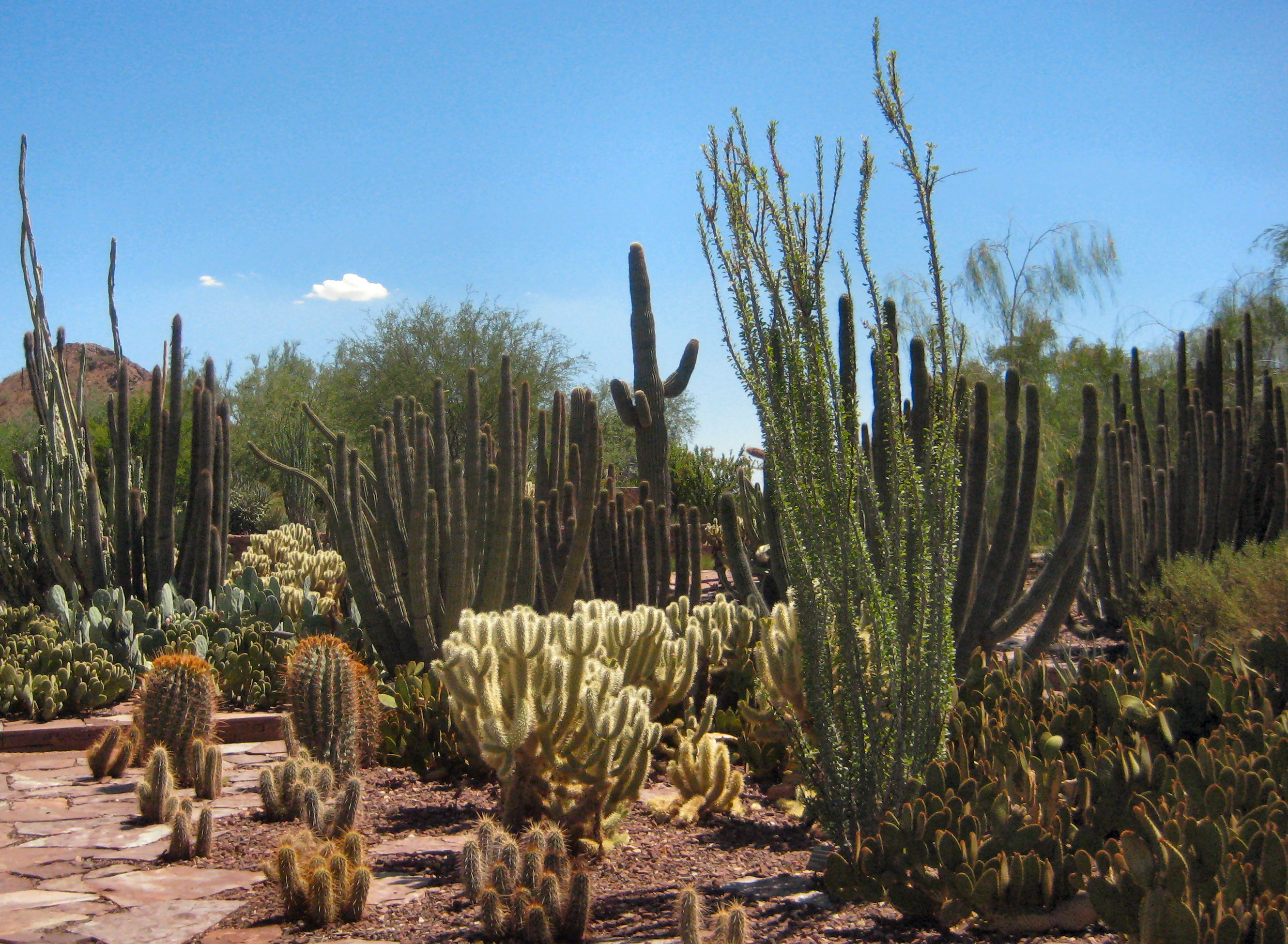 File:Desert Botanical Gardens.jpg - Wikimedia Commons
