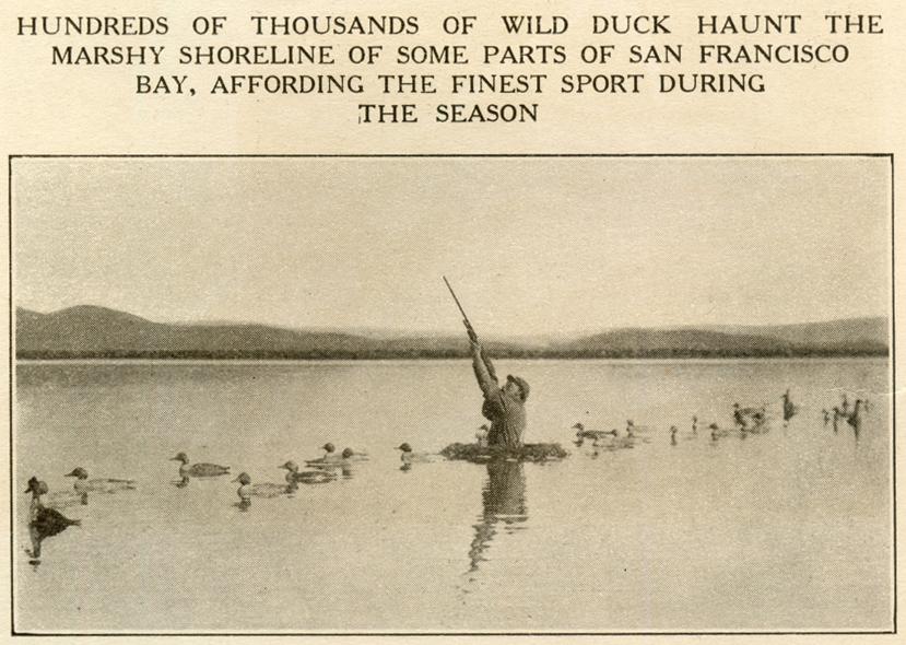Public Duck Hunting Near Kansas City