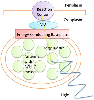 Quantum biology wikiwand diagram of fmo complex light excites electrons in an antenna the excitation then transfers ccuart Image collections