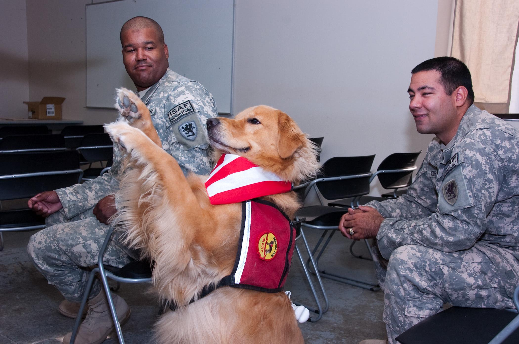 Training Thearpy Dogs