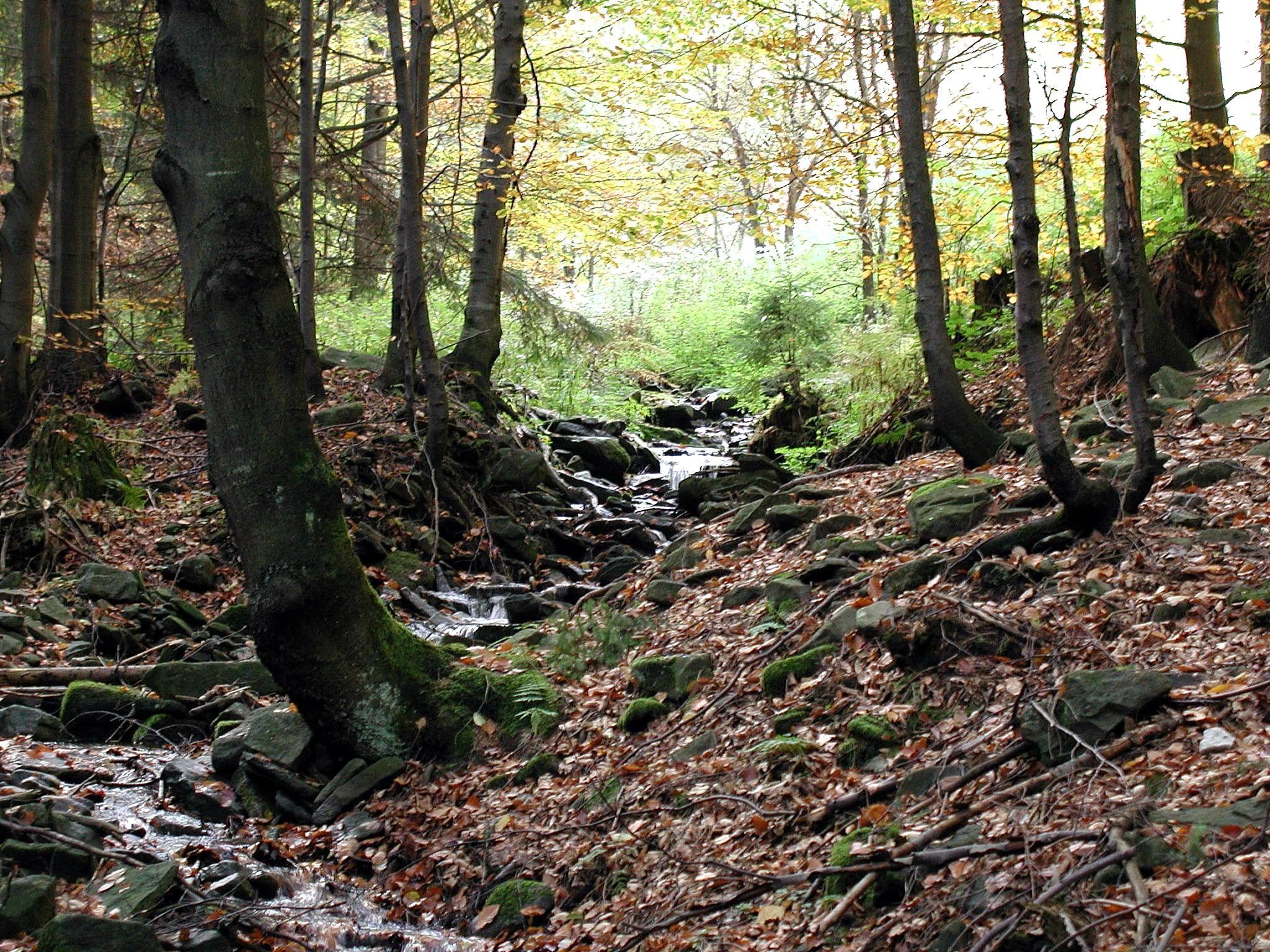 File forest habitat