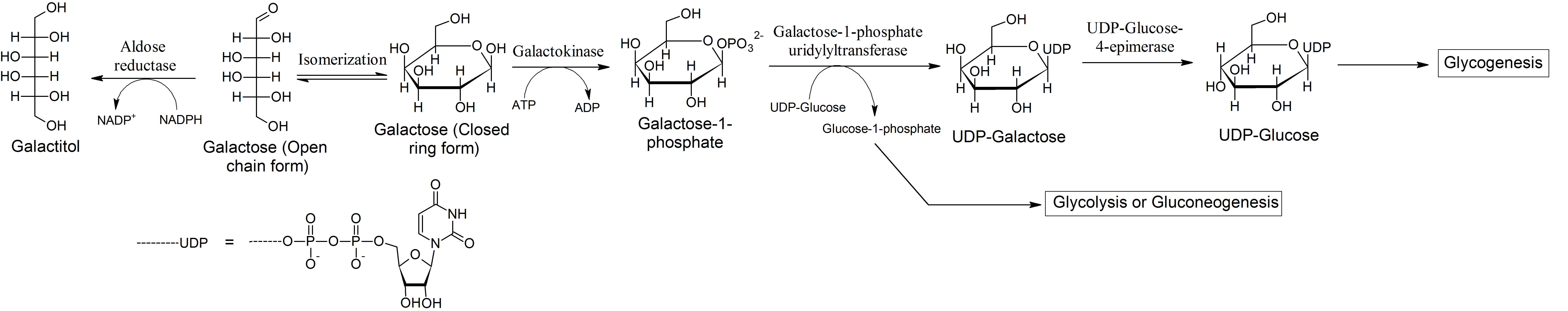 metabolic pathways of galactosemia Nutritional management of inborn errors of metabolism kay davis, rd, csp  addition of galactosemia and congenital hypothyroidism plus a  b-oxidation pathway .