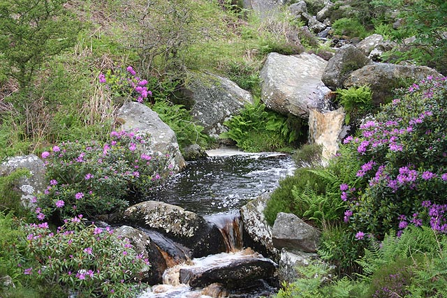 English: Harehope Burn A natural water garden ...