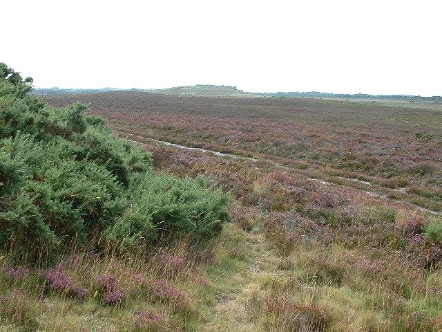 Hartland Moor National Nature Reserve - geograph.org.uk - 36702