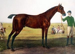 Herod (horse) Thoroughbred racehorse