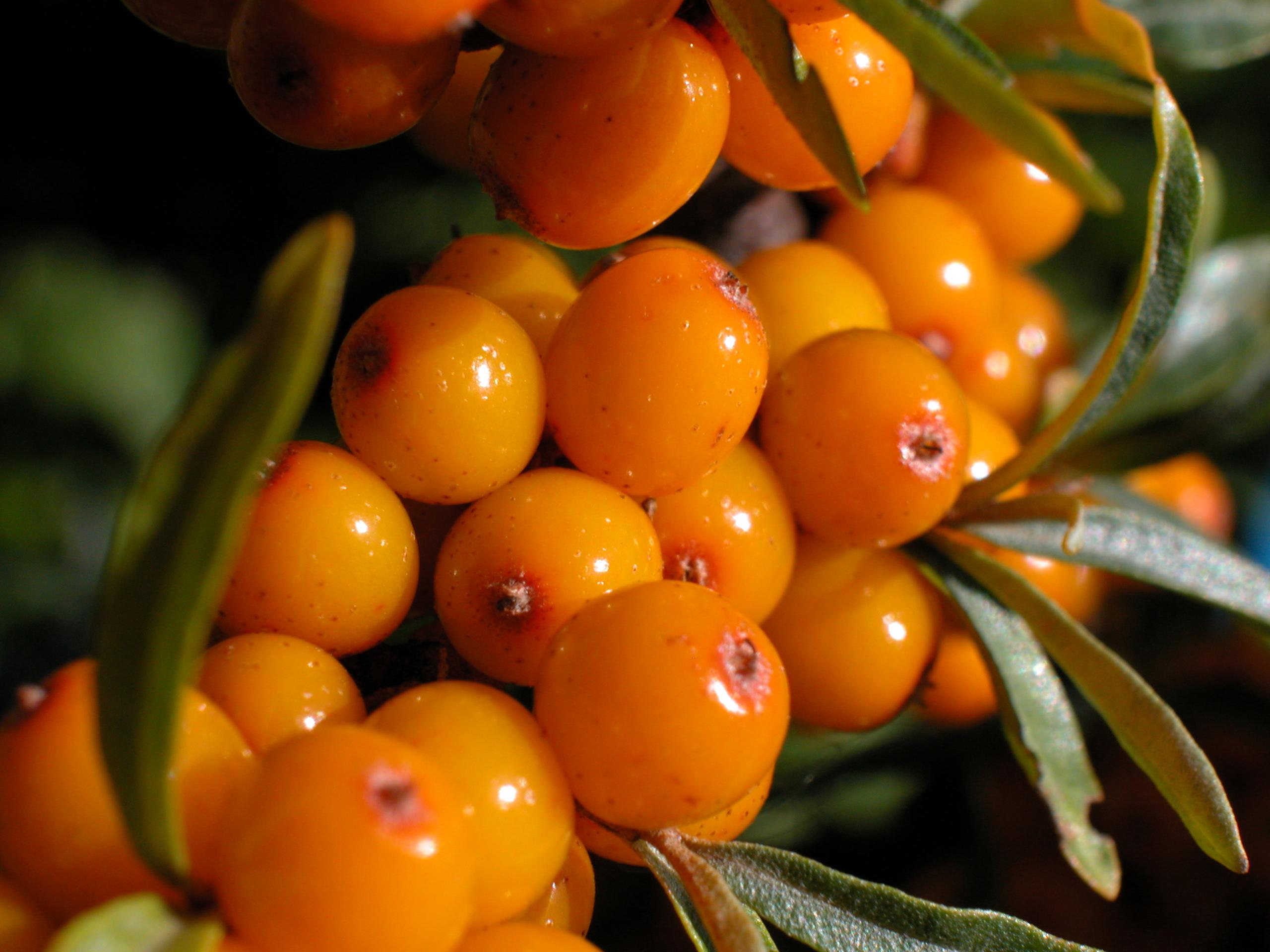 ιπποφαές σούπερ φρούτα