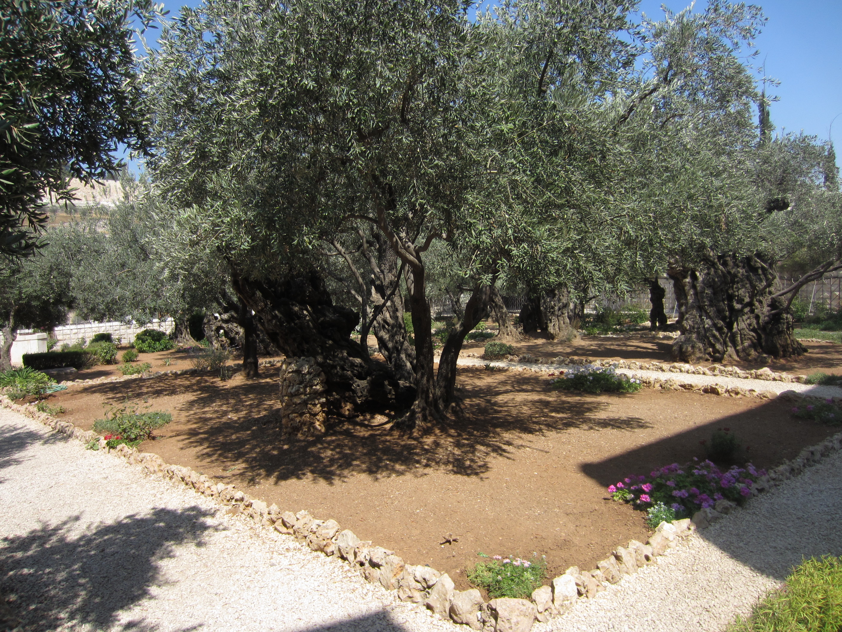 file jerusalem garden of hsemane mount of olives stereo