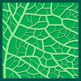 Forme des nervures, réticulée (Réseau de petites nervures)