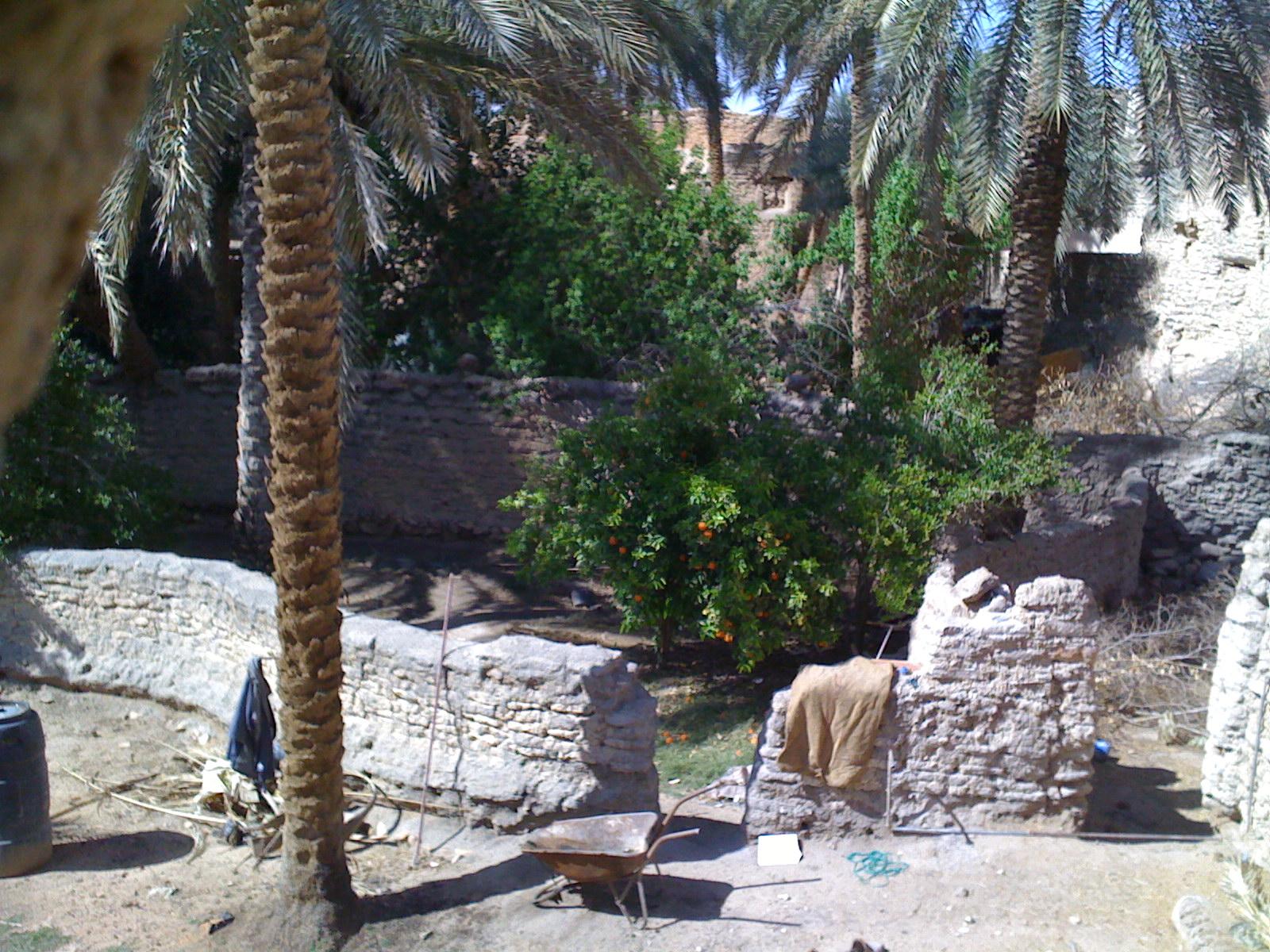 Description libya ghadames old town fruit trees