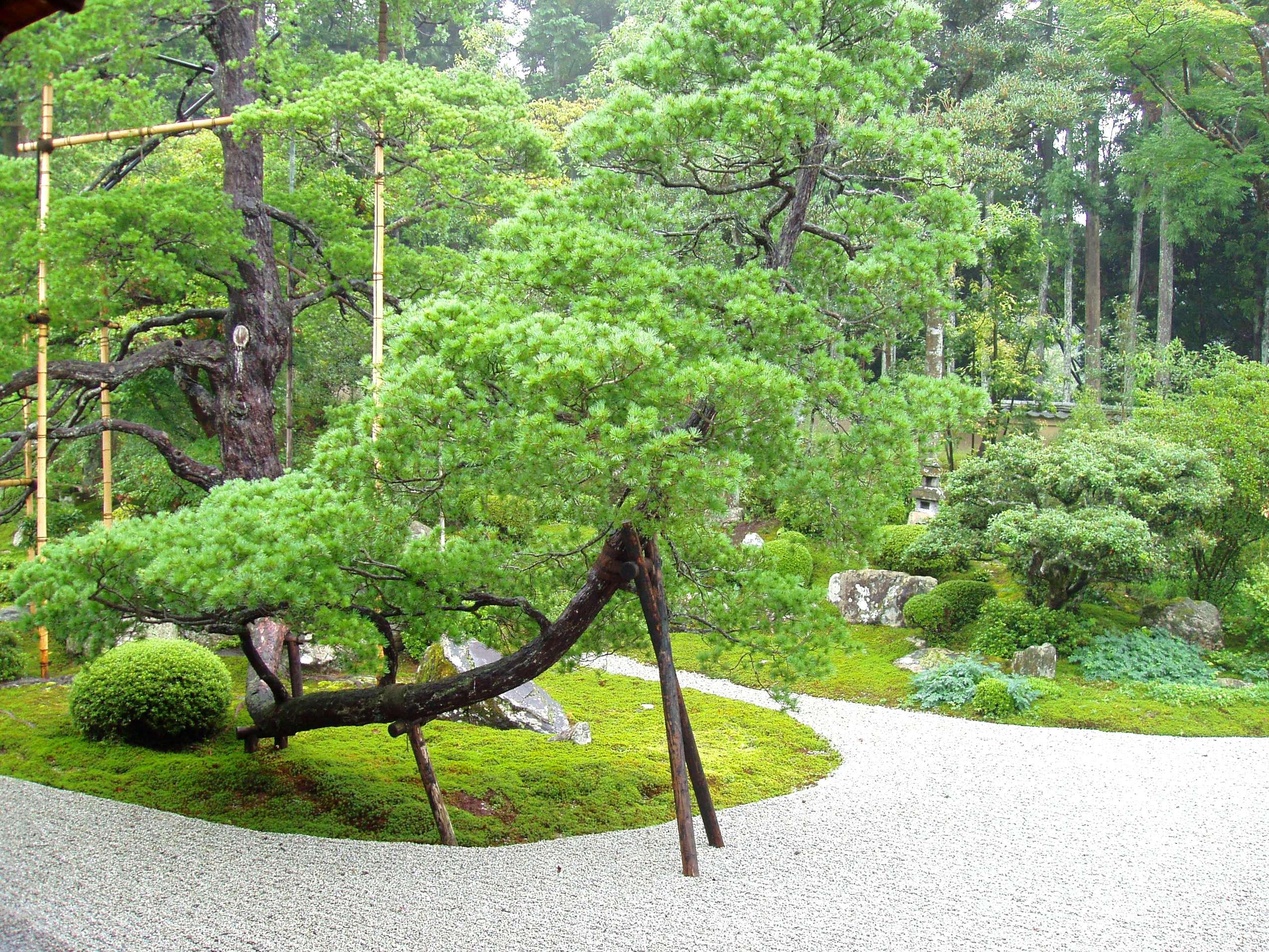 File manshuin temple kyoto garden jpg wikimedia commons for Zen garden trees