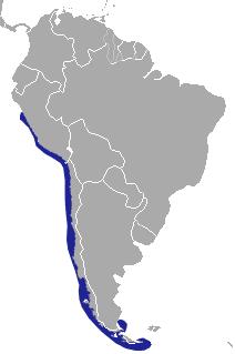 Marine Otter area