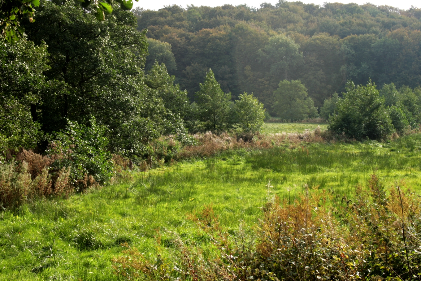 Meadow-and-gallery-forest.jpg
