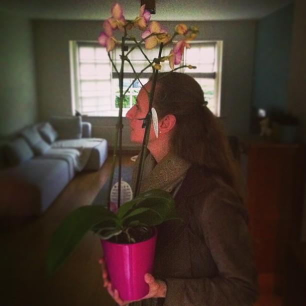Tiny 33 Minimalist Patio Design On Wooden Pergolas Flower Pots Flowers Garden Dining Room Exterior - RdcNY