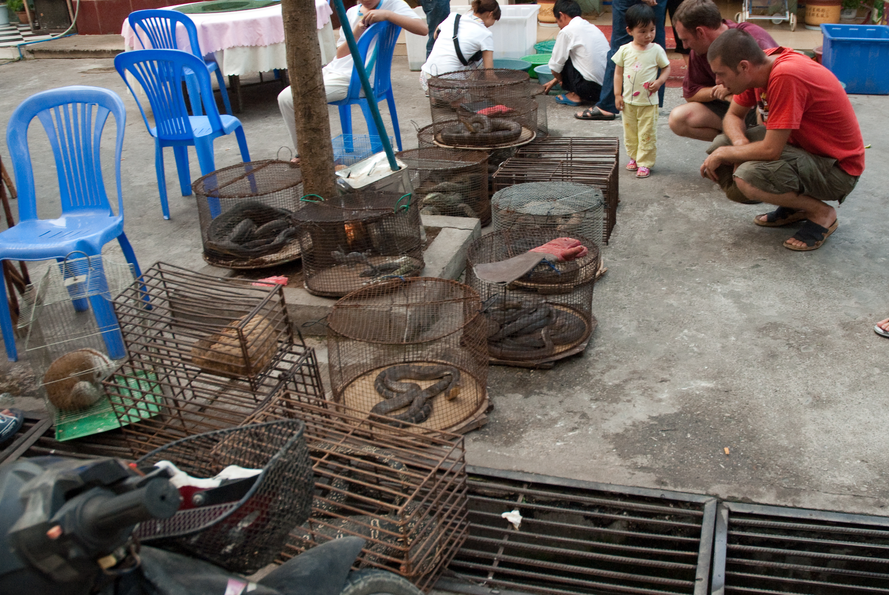 File myanmar illicit endangered wildlife market 05 jpg wikimedia