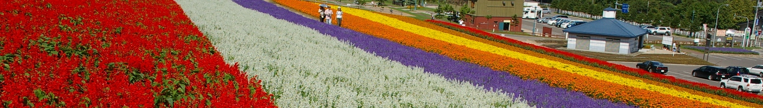 Nakafurano town ownership lavender garden
