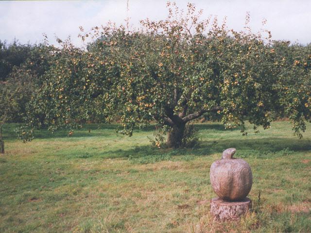 No Man's Orchard - geograph.org.uk - 925644