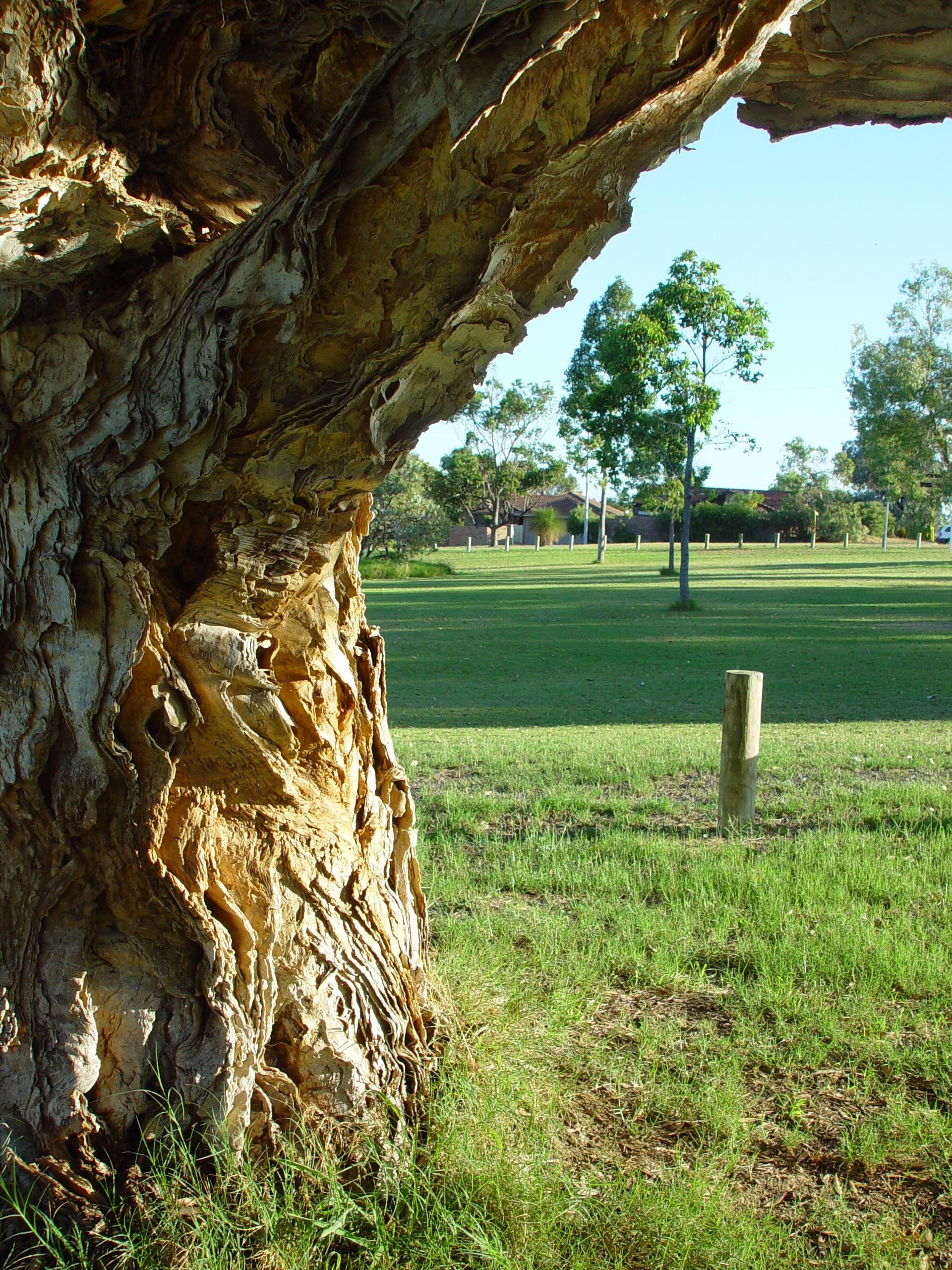 description of trees for essays