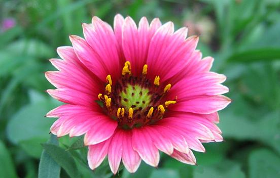 Pink flower photos geccetackletarts pink flower photos mightylinksfo