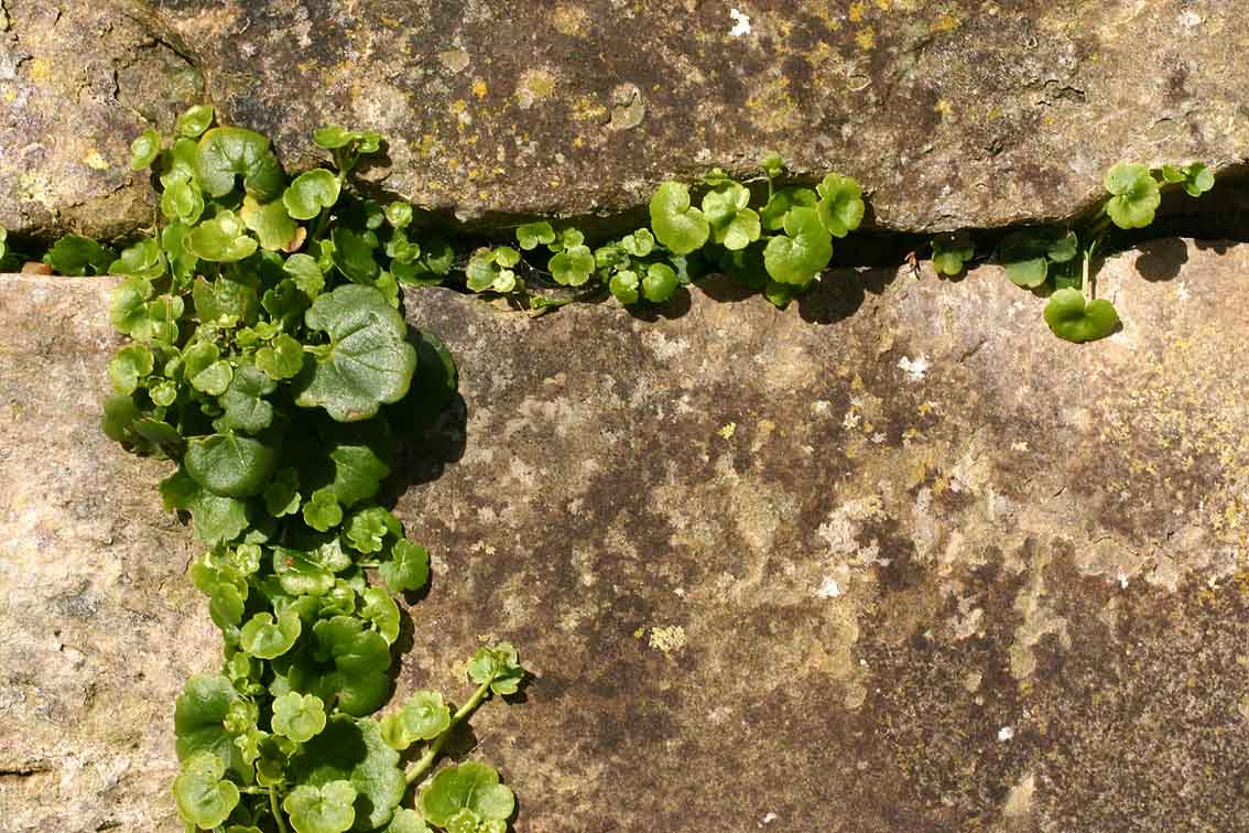 File Plant Growing In Wall Jpg