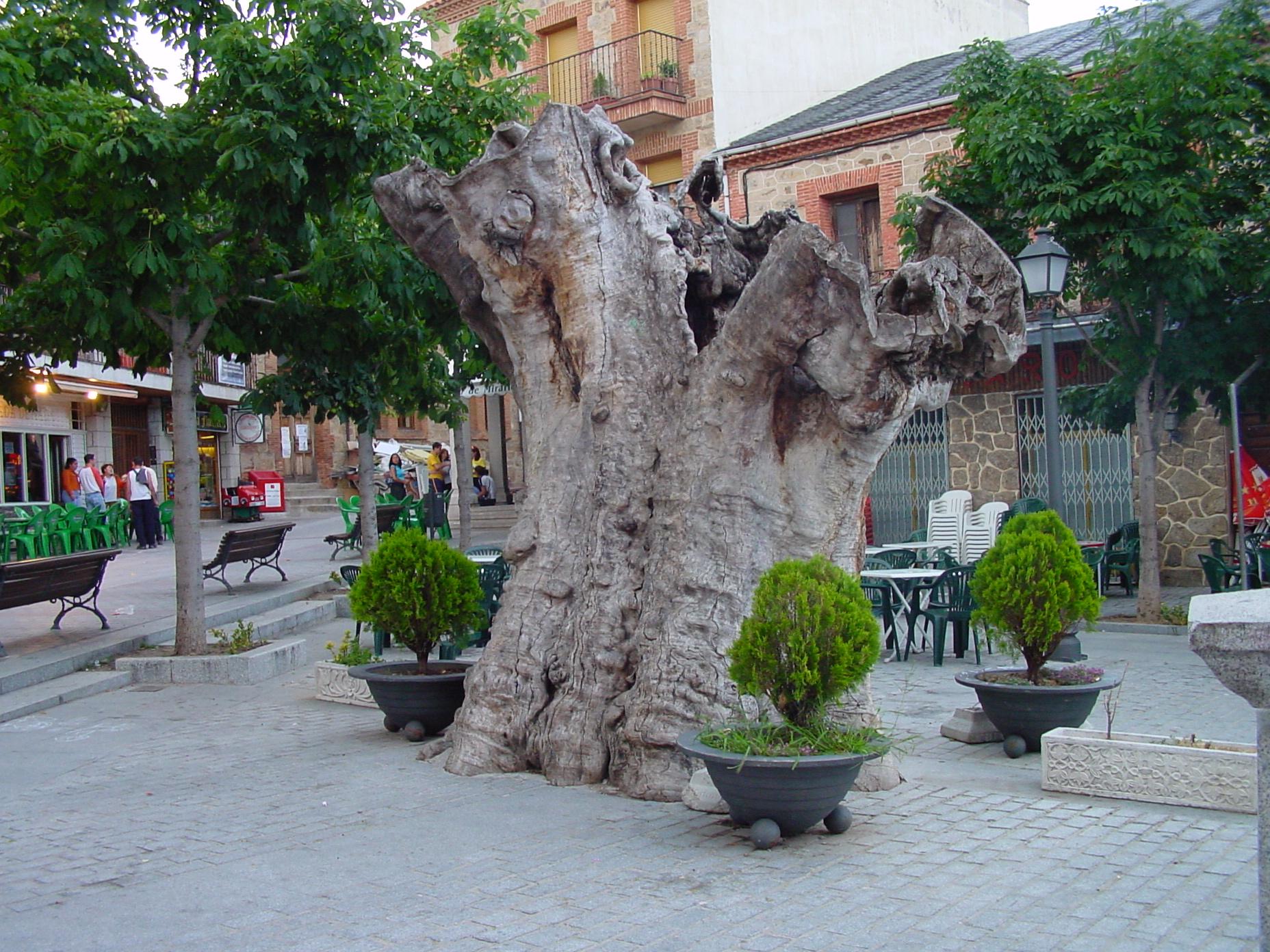 Plaza del Álamo, en Miraflores de la Sierra (Madrid)