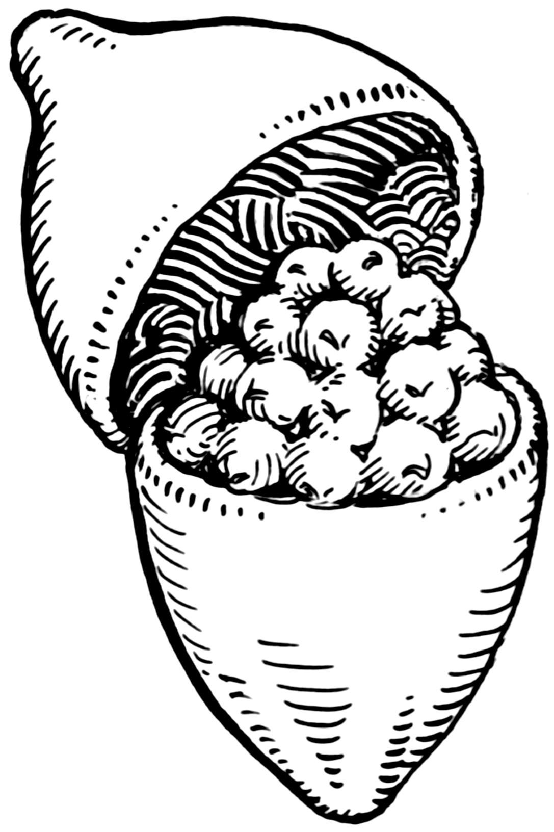 Capsule (fruit)