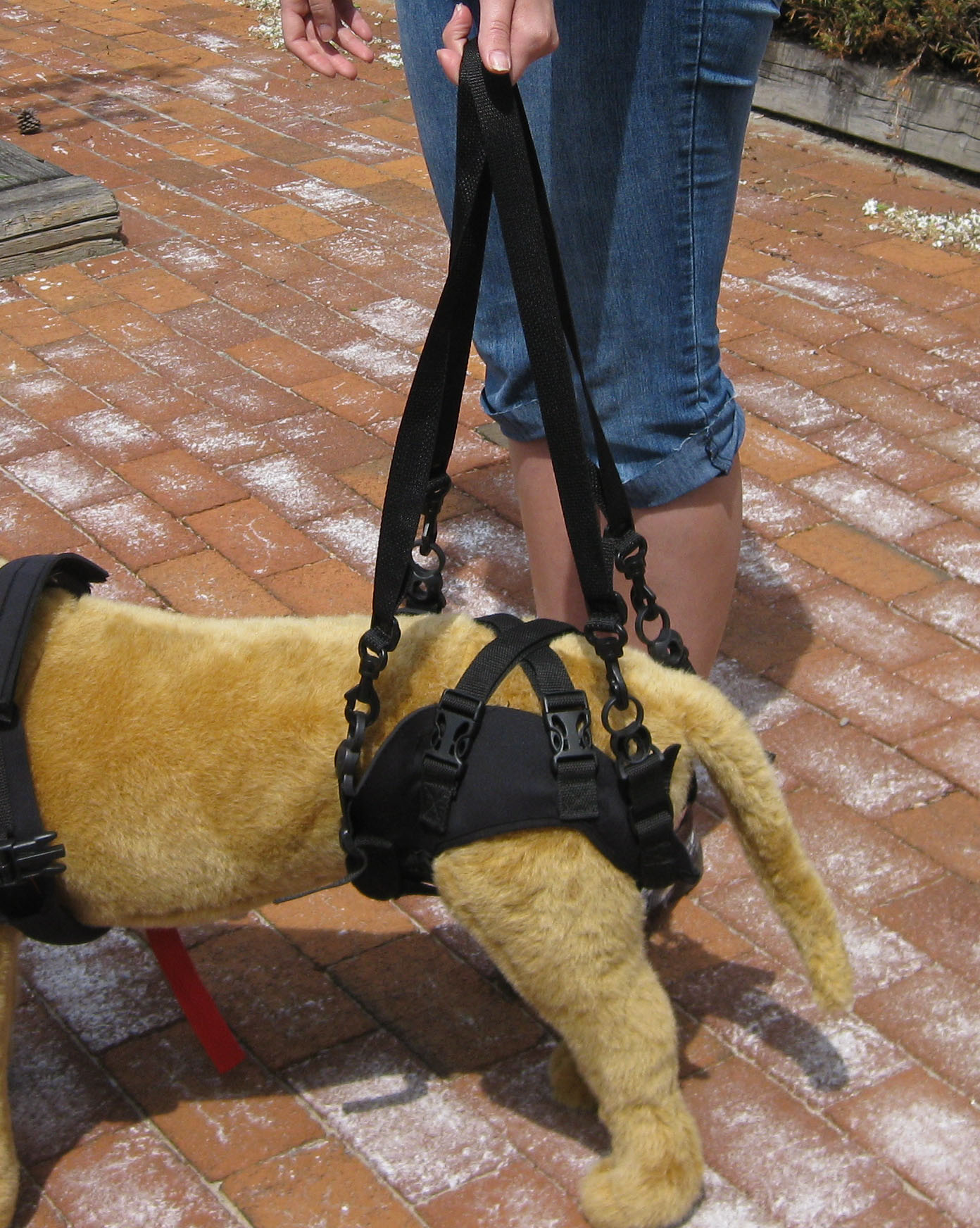 File Rear Support Harness For A Mobility Impaired Dog Jpg