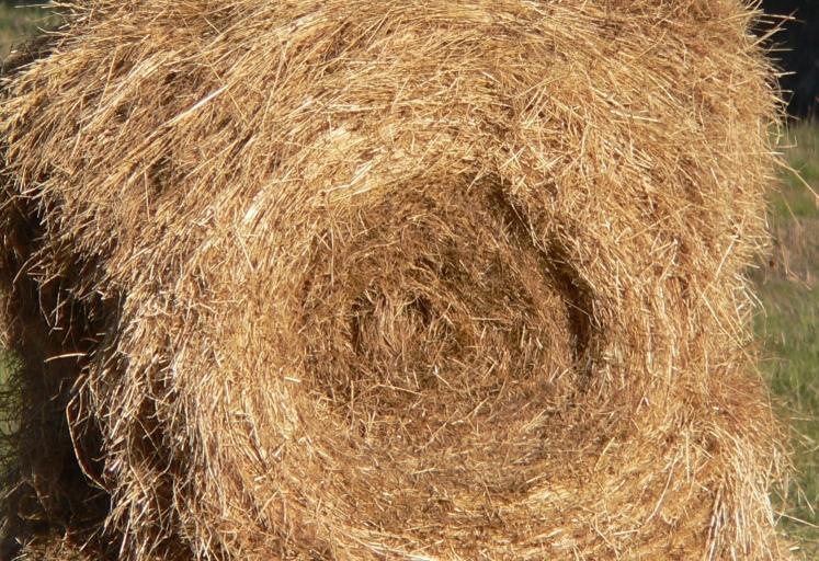 تربية الأرانب في المنزل Round_hay_bale,_partially_eaten